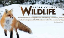 eagle_county_featured