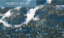 forest_road_featured