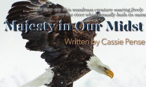 majesty_featured