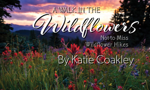 wildflowers_featured